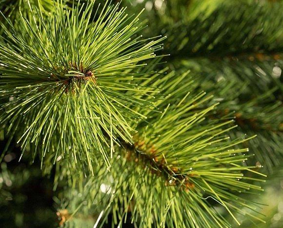 Искусственная елка изготовленная из лески