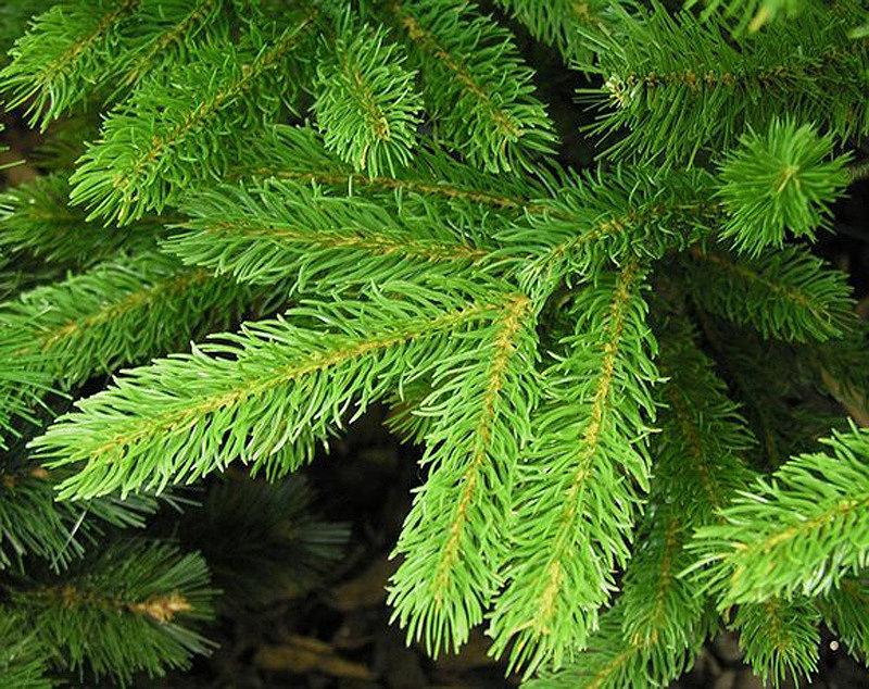 Искусственная елка из полиэтилена